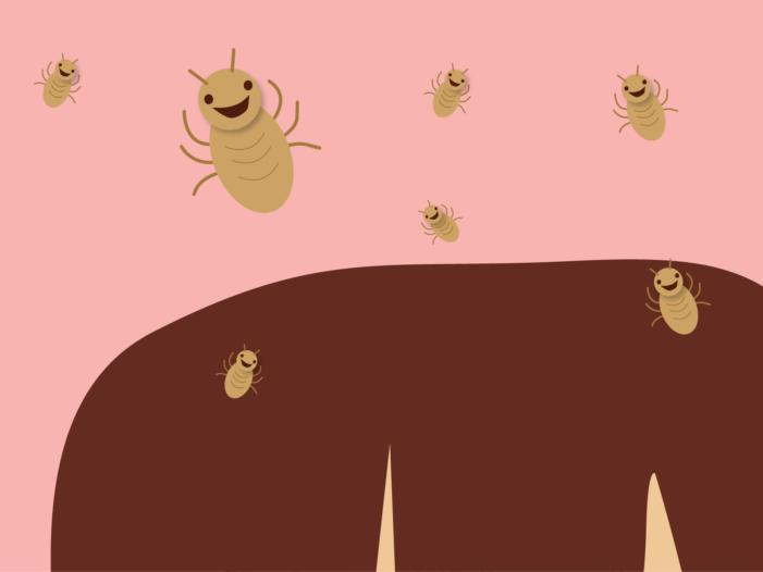 Lembran: as locións ou champús non serven para previr os piollos