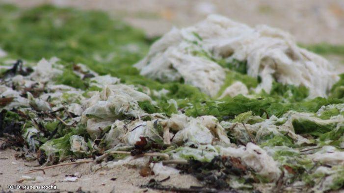 A Fundación CETMAR analiza o uso das algas como fonte natural e sustentabel dos novos productos cosméticos