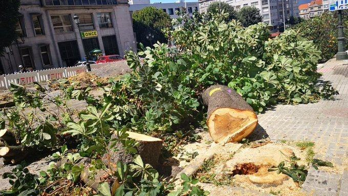 Salvemos á árbore urbana: stop arboricidio!