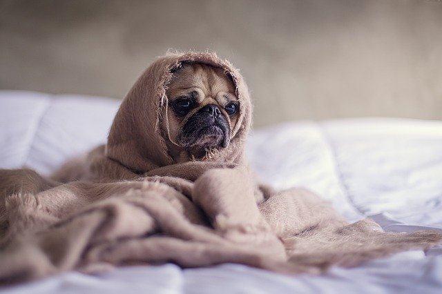 Apartamentos en Marina Dor que admiten perros y mascotas