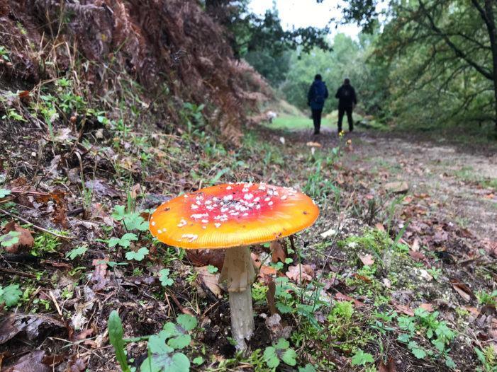 """Unha ruta para gozar do outono """"en estado puro"""""""