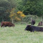 Medio Rural convoca preto dun millón de euros en axudas para indemnizacións por sacrificio obrigatorio de animais