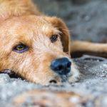 O Concello de Marín investiu máis de 15.000 euros no 2019 para frear o abandono animal