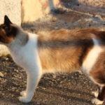 Sabedes que os animais rueiros ou abandonados son responsabilidade do Concello de Vigo?