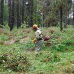 A Xunta convoca 13 millóns de euros en axudas para accións silvícolas de prevención e para o incremento do valor ecolóxico dos montes galegos