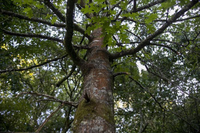 O DOG convoca as axudas para a execución de accións de mellora e conservación en espazos da Rede Natura 2000