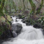 Convocadas axudas para a execución de accións de mellora e conservación nos seis parques naturais de Galicia