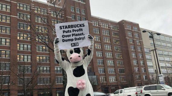 Starbucks quiere dejar de servir Lácteos: Lo que PETA Siempre ha Recomendado