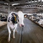 España consigue la apertura del mercado de Filipinas a la carne de vacuno