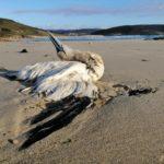 """ADEGA reclama a revisión do Plan de Continxencia por contaminación mariña para evitar futuros """"sentinazos"""" na costa galega"""