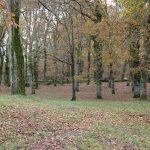 Galicia aumentou no último ano a súa superficie forestal ordenada en case un 8% ata as máis de 262.000 hectáreas