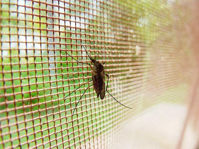 La malaria: la enfermedad que mata al año entre 700.000 y 2.700.000 personas