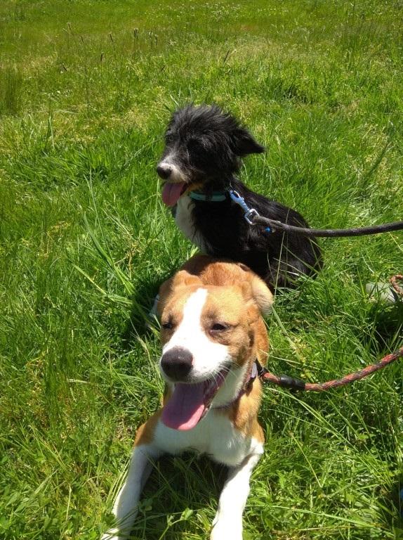 """A feliz recuperación de """"Pipa"""" e """"Comba"""", dúas cadelas que foron operadas de urxencia no CAAN"""