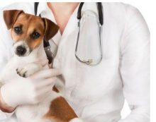 Conseguir formación homologada de auxiliar de veterinaria a través de Euroinnova