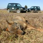 SEO/BirdLife y WWF presentan un informe sobre el impacto del envenenamiento de fauna en España en 25 años
