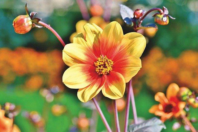 Consejos de mantenimiento para plantas y jardines