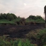 Un incendio en la calle Carrasqueira arrasa con 100 metros cuadrados de maleza
