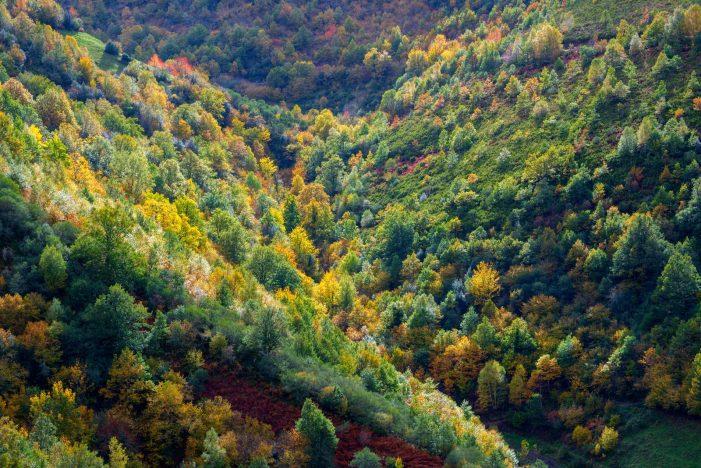 A Xunta concede case 5,2 M€ en axudas para a creación de superficies forestais en máis de 2.800 hectáreas de terreo