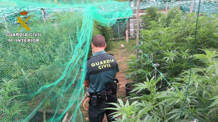 La Guardia Civil interviene una plantación de marihuana en Barro