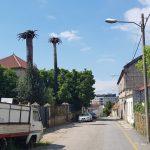 Atopan un corpo sen vida no Barrio de Ribadavia de Vigo