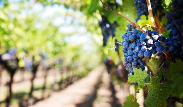 Los mejores vinos de la provincia de Cádiz
