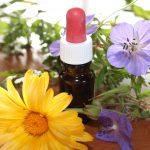 Los productos más destacados que puedes encontrar en cualquier herboristería