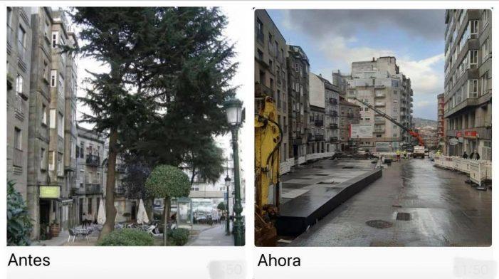 Carta al Ayuntamiento de Vigo. Gestión del Arbolado Urbano