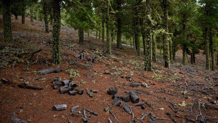 España se suma junto a otros 8 países europeos a la Declaración de Ambición 2025 para reforzar la cooperación contra la deforestación