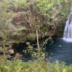 Santa Locaia: outro bosque atlántico de grande valor ameazado polas eólicas