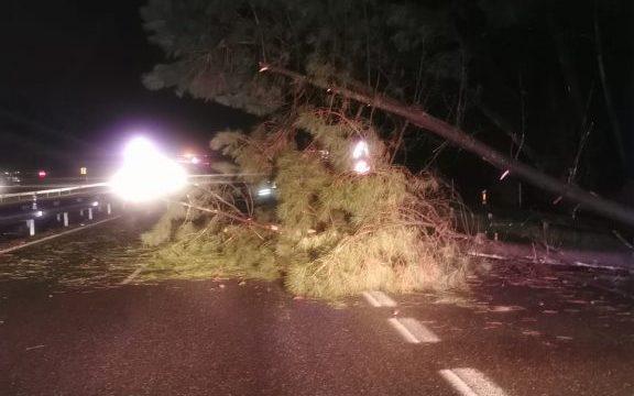Protección Civil de O Porriño retirou árbores, postes, chapas e toldos derrubados polos refachos de vento