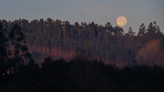 Preto de 700 beneficiarios das axudas para a elaboración de instrumentos de ordenación forestal poderán xestionar unhas 200.000 hectáreas de monte ao longo deste ano 2021