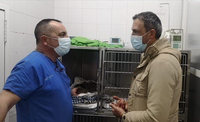 """Marcos Rey preocúpase polo estado de saúde do gato Balín tras ser operado e advirte de que """"este acto de falta de humanidade non quedará impune"""""""