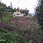 A A.V. de Teis demanda unha plantación de árbores autóctonas nos terreos da tala do monte da Guía