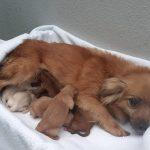 O CAAN da Deputación rescatou dúas camadas cun total de 12 cachorros nun prazo de dous días en Caldas de Reis e O Porriño