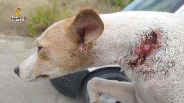 La Guardia Civil desarticula una organización dedicada al robo y venta de perros de caza