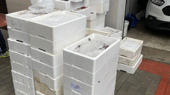 Gardacostas requisa preto de 700 quilos de distintas especies de peixe e marisco e máis de 460 útiles, a maioría na ría de Pontevedra