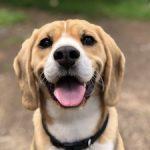 "El Pet sitting es una alternativa a la ""residencia canina"""