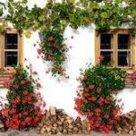 Reduciendo los ruidos externos gracias a las plantas