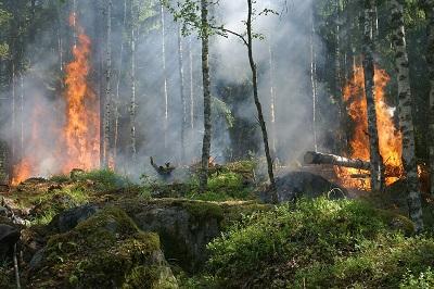 Controlado un incendio forestal en el ayuntamiento ourensano de Calvos de Randín, parroquia de Randín, que afecta al Parque Natural do Xurés